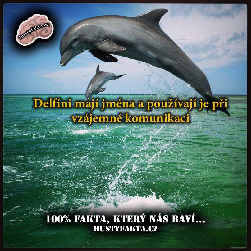 Fakt115 - www.hustyfakta.cz