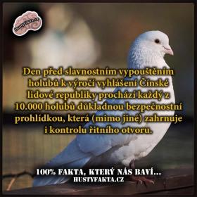 Bezpečnostní kontrola holubů